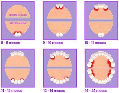 com-surten-les-dents